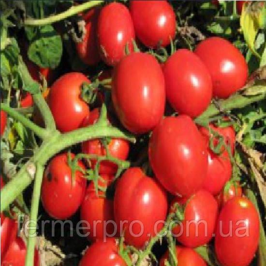 Семена томата Талент F1 1000 семян Esasem