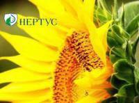 Семена подсолнечника Феликс ( Нертус, фракция Элит)