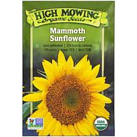 High Mowing Organic Seeds, Подсолнечник громадный, 1/8 унции