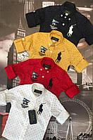 Стильная рубашка для мальчика 1-12 лет