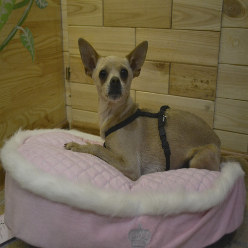 "Trixie  TX-37830 матрац ""My Princess"" для собак 60*40см"