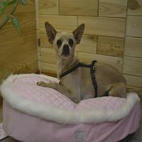 "Trixie  TX-37830 матрац ""My Princess"" для собак 60*40см, фото 1"