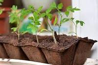 Торфяные горшки для выращивания рассады  (Фасовка: 1 шт.)