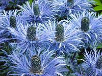 Альпийский (Фасовка: 1 г; Цвет: синий)