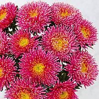 Астра Арлекин (Фасовка: 0,1 г; Цвет: розовый)