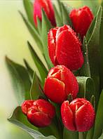 Алмазная вышивка (камнями) Тюльпаны 20/25см