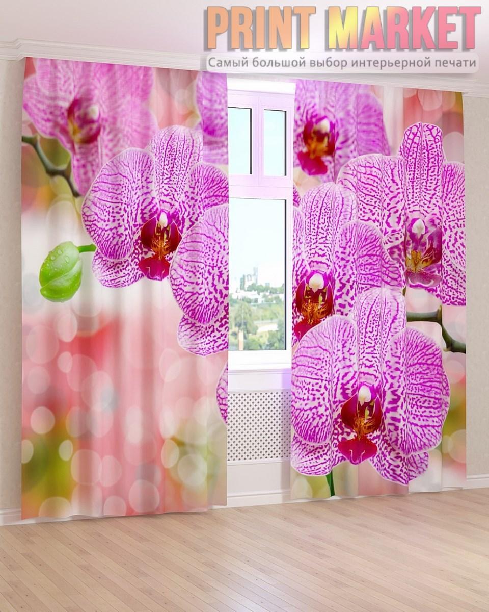 Фото шторы крупная орхидея