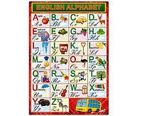 """Плакат А2 """"Азбука английская"""", ламинированная бумага"""