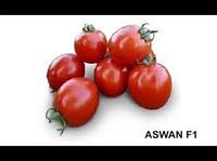 "Семена томат "" АСВОН F1 "", 5000 сем , Kitano Seeds, детерминантный, ранний."