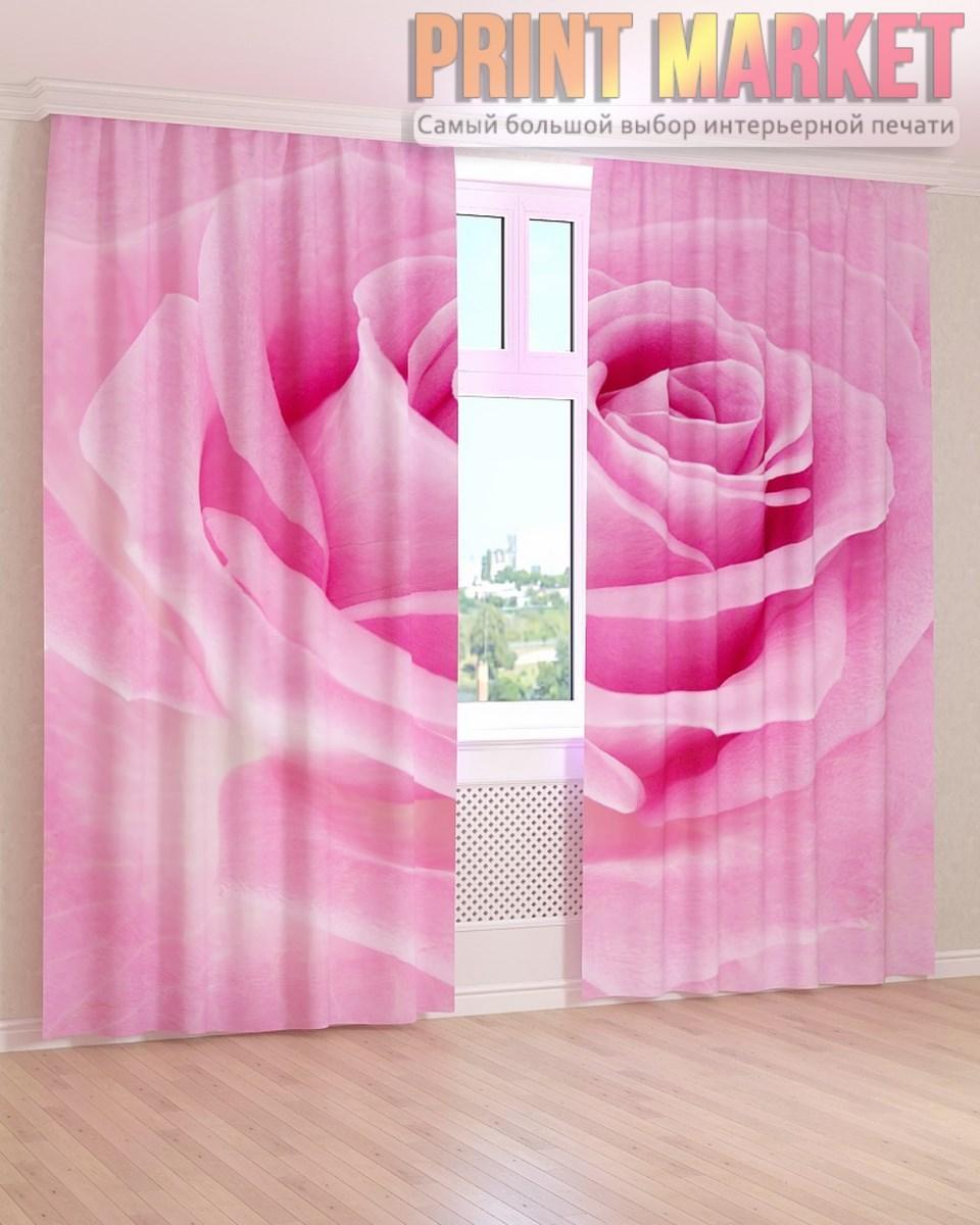 Фото шторы макро розовая роза