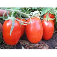 Семена томата Гладис F1 \ Gladis F1 1000 семян Esasem