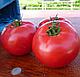 Семена томата Пинк Буш F1 \ Pink Bush F1 1000 семян Sakata, фото 2