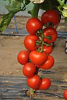 Семена томата Чероки F1 \ Cheroki F1 250 семян Esasem