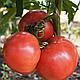 Семена томата Розалба F1 \ Rozalba F1 1000 семян Esasem, фото 3