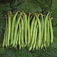 Семена Фасоль Палома (Фасовка: 100 000 шт)