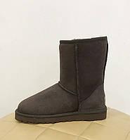 Угги женские короткие замшевые UGG Australia  Classic Short коричневые