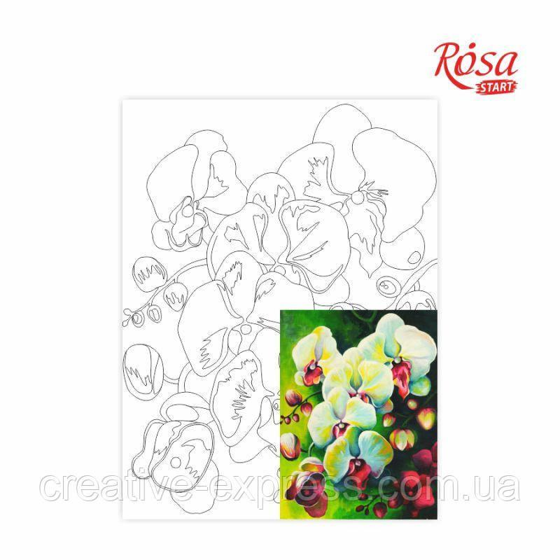 Полотно на картоні з контуром, Натюрморт №18, 30*40, бавовна, акрил, ROSA Talent