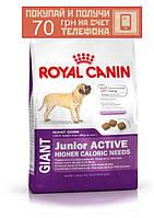 Корм Royal Canin Giant Junior, для щенков гигантских пород, 4 кг + ПОДАРОК 70 грн на мобильный