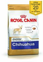 Корм Royal Canin Chihuahua Junior, для щенков Чихуахуа до 8 месяцев, 0,5 кг + ПОДАРОК 20 грн на мобильный