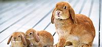 ДМВ для кролів універсальний 4%