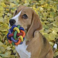 Trixie TX-32621 мяч плетеный каучук 7см  для собак, фото 1