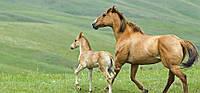Готовий корм для коней середнього та низького спортивного навантаження