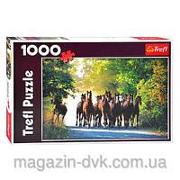 Пазлы  1000 Чистокровный английские кони 10168 лошади