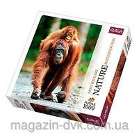 Пазлы  1000 Орангутанг природа 10514