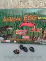 Яйцо динозавра растет в воде  687