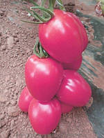 Семена томата Пинк Пионер F1 \ Pink Pinoneer F1 Sakata 1000 семян
