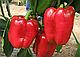 Семена перца Даймос F1 \ Daymos F1 500 семян Esasem, фото 2