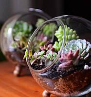 Комнатные растения РОЗНИЦА
