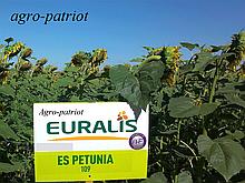 Семена подсолнуха ЕС Петуния Евралис