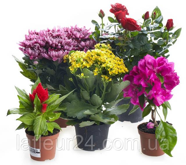 Обновление горшечных растений. Спешите за самыми красивыми цветочками для Ваших любимых женщин .