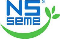 Подсолнечник NS Seme (сербия)