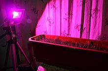 Фито прожектор 10w для растений фитолампа fito