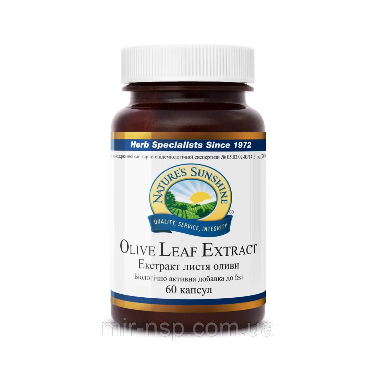 Листя оливи (екстракт листя оливи бад, Olive leaf) бад NSP