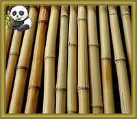 Бамбуковый ствол светлый декоративный, длина 4 м
