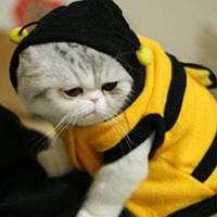 Теплая одежда для кошек из флиса Пчелка