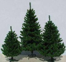 Ялинка штучна ( сосна кримська ) темно-зелена 1,65 метра, фото 2