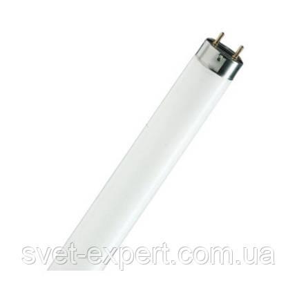 Лампа Люминисцентная Osram L 18W/640 G13 590mm, фото 2