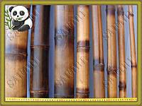 Бамбуковый ствол обожженный, длина 3 м