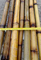 Бамбуковый ствол обожженный, длина 3 м диаметр 4-5 см, L 3 м