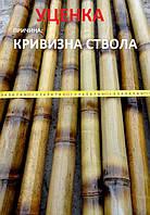 Бамбуковый ствол обожженный, длина 3 м диаметр 5-6 см, L 3 м