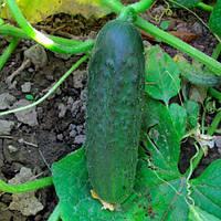 Семена огурца Хелен 1000 сем.  (Саката) Сакура