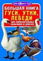 Большая книга. Гуси, утки, лебеди