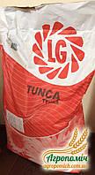 Семена подсолнечника Тунка ЛГ Tunca LG выдержывает засуху