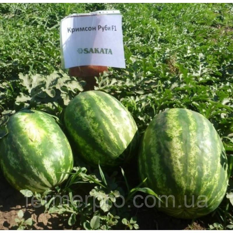 Семена арбуза Кримсон Руби F1 \ Krimson Ruby F1 1000 семян Sakata