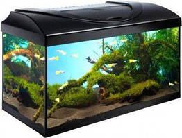 Diversa Startup LED Expert 60 аквариум прямой (54л)