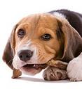 Косточка дентафитовая для собак 11 см 50 грамм, фото 3